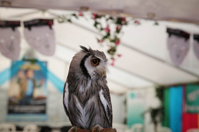 the t-shirts for the campaign are available from The Main Source in Pottergate, and proceeds go to a Norfolk owl sanctuary, represented here by this beauty in the Bo Nanafana VIP tent.
