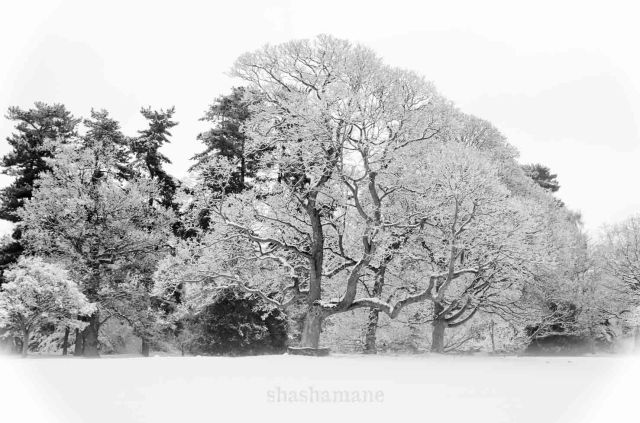 snowy norwich