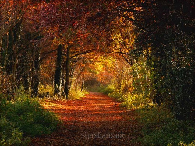 walk into autumn ...
