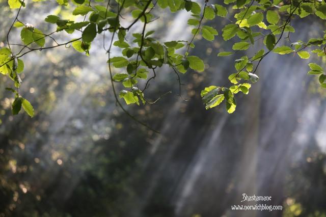 trees and smoke and sunshine